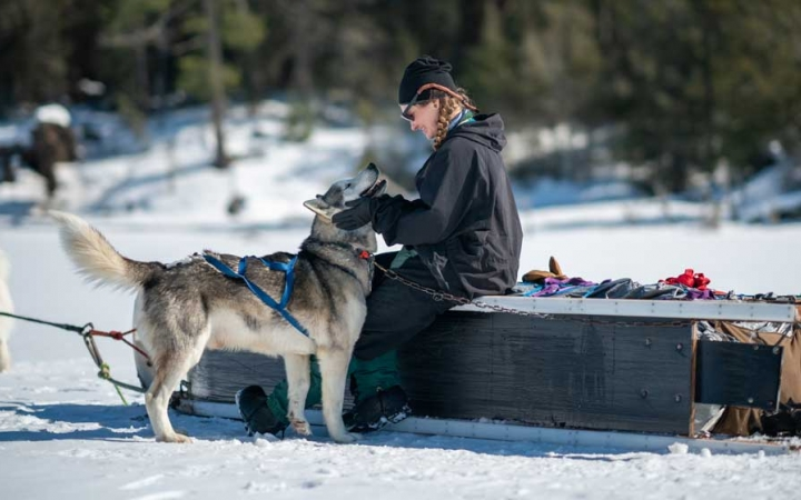 dog sled trip for young adults