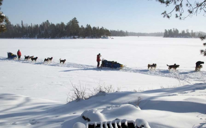 gap year dog sledding trip in minnesota